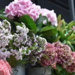 photo de fleurs, bouquet, composition florale, multiples couleurs, saisons- Saona Maître Artisan Fleuriste à Metz